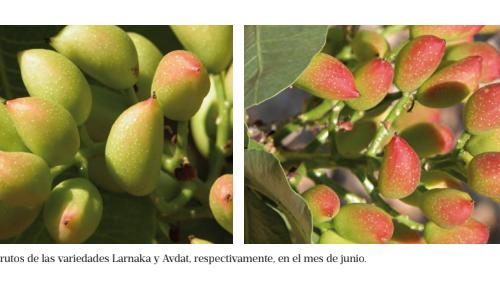 Imagen de la Revista Agricultura de Editorial Agrícola de Mayo 2017