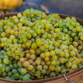 food healthy agriculture vineyard