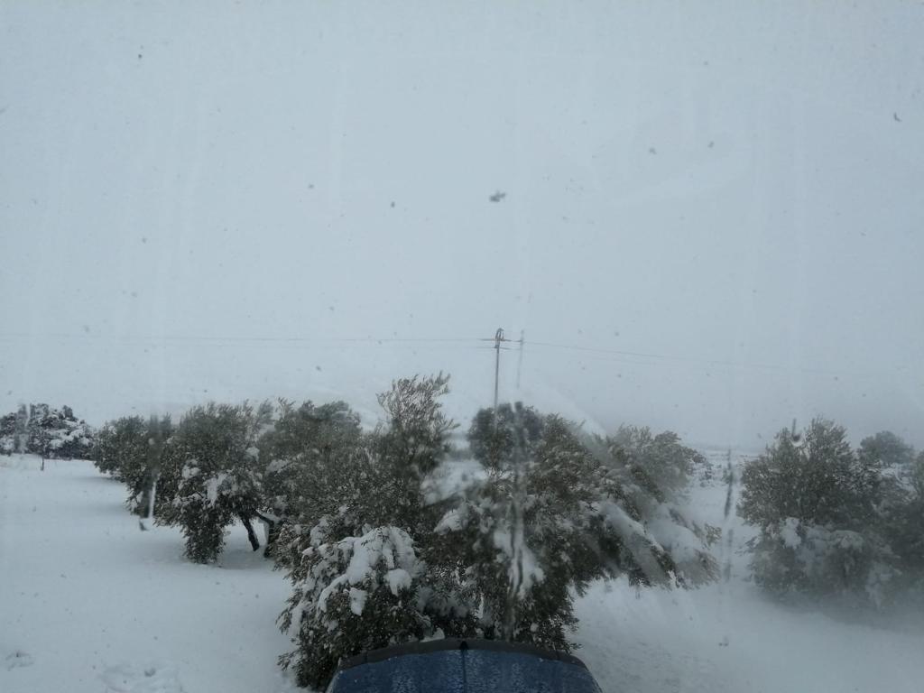 nieve olivar
