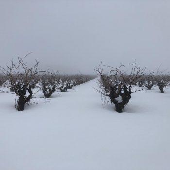 Nieve en viña